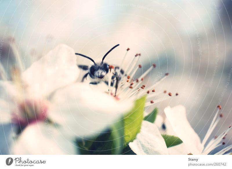 Ich kann dich sehen! Natur blau weiß grün schön Pflanze Sommer Freude Blume Blatt klein Glück Blüte Luft lustig rosa