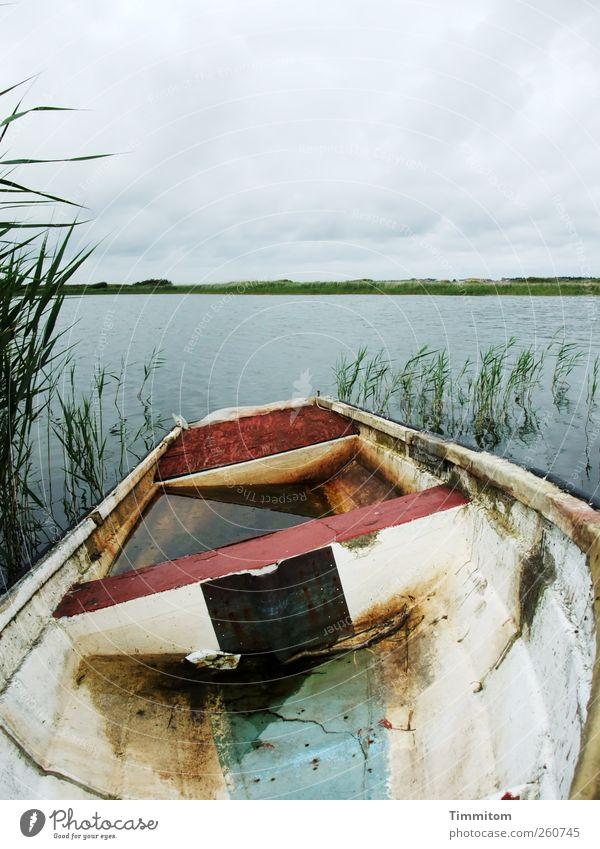 Du musst einfach zuversichtlich sein! Umwelt Natur Wasser Himmel Wolken Sommer Seeufer Dänemark Wasserfahrzeug Blick warten kaputt nass grau grün weiß Verfall