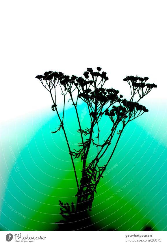 Surreal Natur Pflanze Farbe dunkel hell Fehler unnatürlich