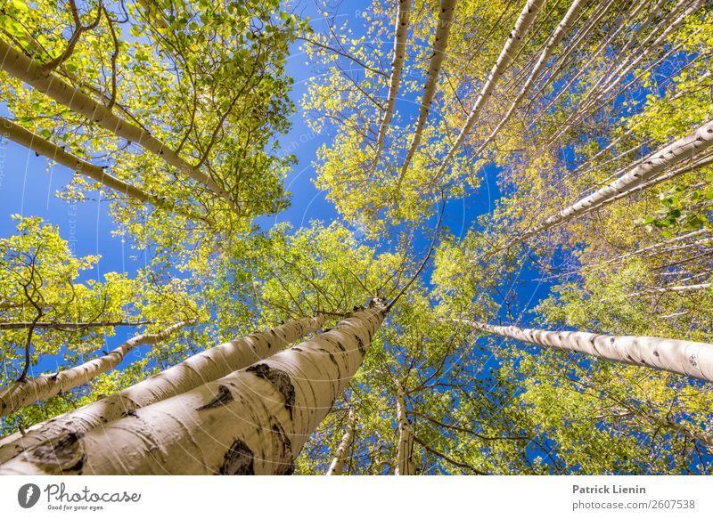 Fall in Colorado Wellness Leben Wohlgefühl Erholung ruhig Ferien & Urlaub & Reisen Tourismus Ausflug Abenteuer Ferne Berge u. Gebirge wandern Umwelt Natur