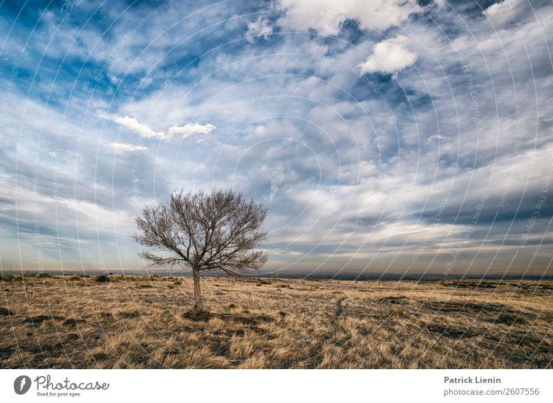 North Table Mountain Zufriedenheit Abenteuer Ferne Freiheit Umwelt Natur Landschaft Himmel Wolken Herbst Klima Klimawandel Wetter Pflanze Baum Wiese Hügel
