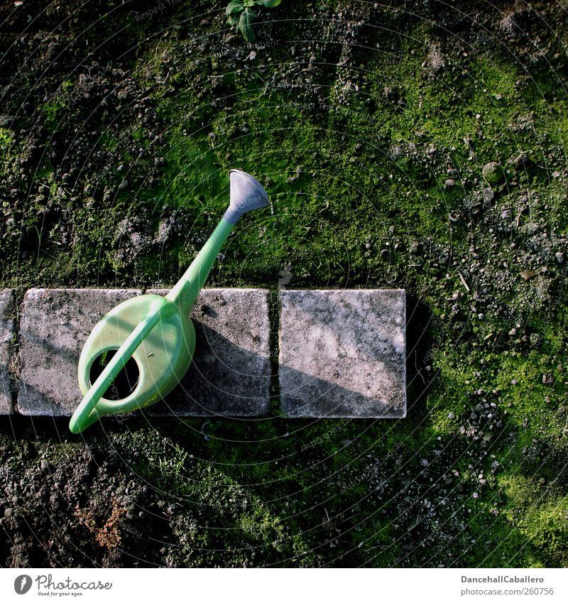 Gießkanne auf Gehweg im Garten Freizeit & Hobby Gartenarbeit Umwelt Natur Erde Frühling Klima Eis Frost Moos Wege & Pfade Stein Arbeit & Erwerbstätigkeit alt