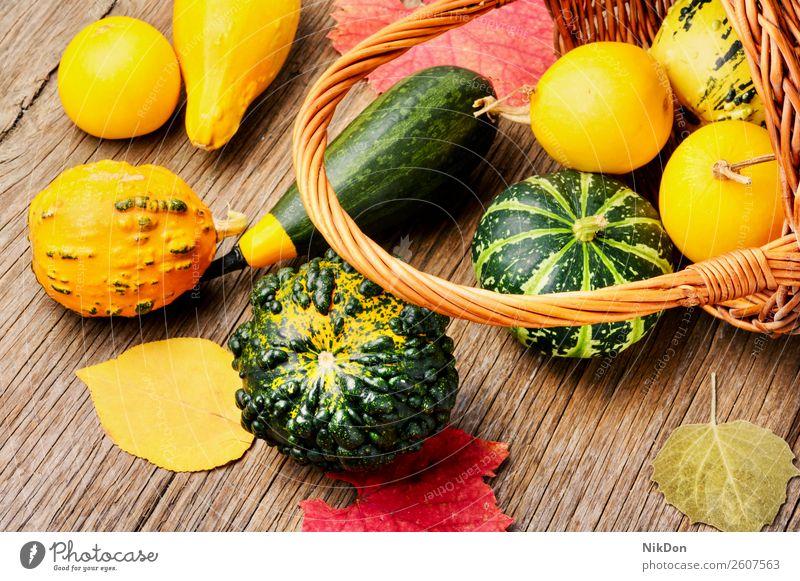Herbstlicher Kürbis im Korb fallen Saison saisonbedingt Gemüse Halloween Herbstkürbis September Herbstkarte Herbsternte Ernte Erntedankfest Hintergrund
