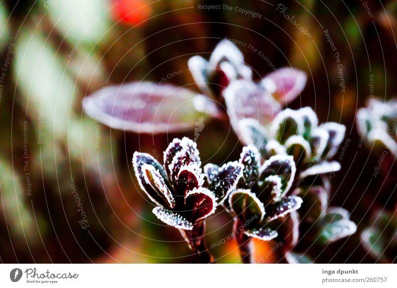 Wintergarten Natur Pflanze Blume Blatt Umwelt Tod Herbst kalt Landschaft Garten Park braun Wetter Eis Klima