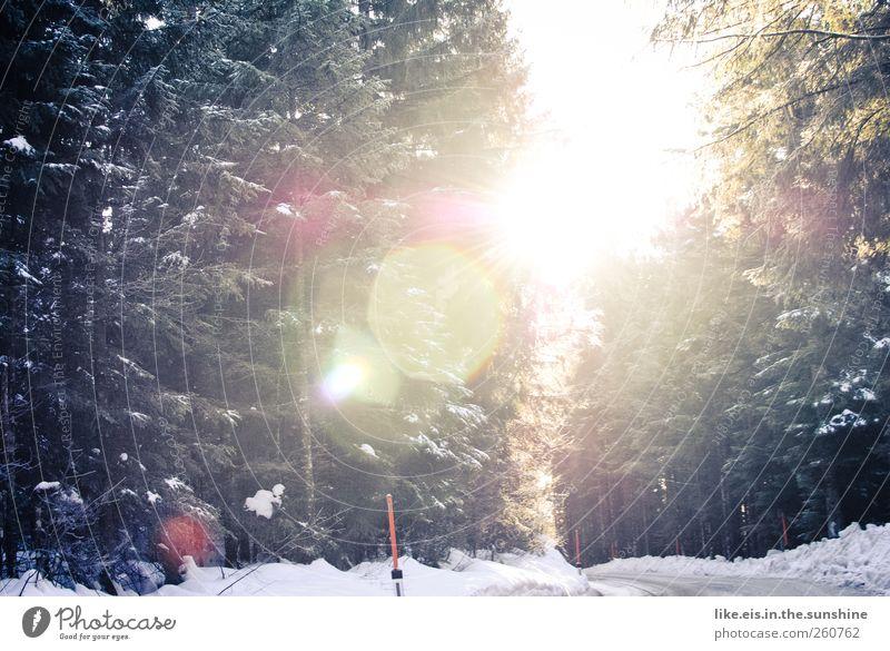 wunderschönen guten morgen! Ausflug Winterurlaub Landschaft Schönes Wetter Eis Frost Schnee Schneefall Baum Wald Alpen Verkehrswege Straße glänzend Energie kalt