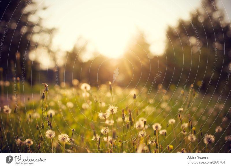 At the End of Day Natur Landschaft Himmel Sonne Sonnenaufgang Sonnenuntergang Sonnenlicht Sommer Herbst Wetter Baum Blume Gras Wiese Blühend entdecken Erholung