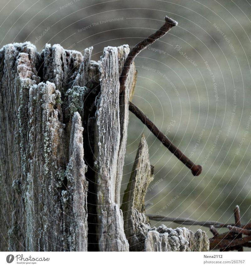 verkrummt Holz Metall Rost alt bedrohlich dunkel kaputt Spitze stachelig grau Stacheldraht Stacheldrahtzaun Zaunpfahl Nagel Barriere Biegung Farbfoto
