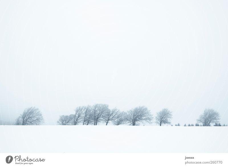 Hinter den Bergen Himmel blau weiß Baum Winter Wolken schwarz kalt Schnee Landschaft Berge u. Gebirge grau hell Eis Feld Nebel