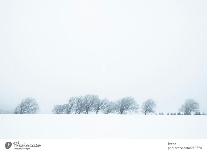 Hinter den Bergen Landschaft Himmel Wolken Winter schlechtes Wetter Nebel Eis Frost Schnee Baum Feld Hügel Berge u. Gebirge hell blau grau schwarz weiß kalt