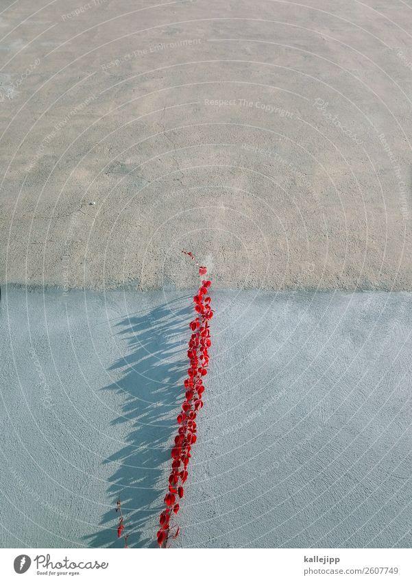 ein fall für die gartenschere Natur Pflanze Stadt Landschaft rot Blatt Herbst Wand Umwelt grau Ast Kletterpflanzen