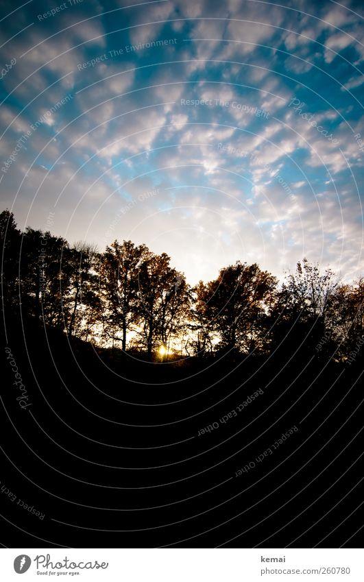 Ende des Tages Umwelt Natur Landschaft Pflanze Himmel Wolken Sonne Sonnenaufgang Sonnenuntergang Sonnenlicht Herbst Schönes Wetter Baum Wald Hügel blau schwarz