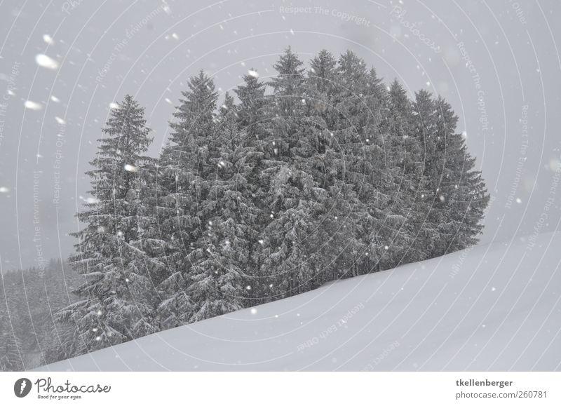 gestöber Umwelt Natur Himmel Wolken Winter schlechtes Wetter Eis Frost Schnee Schneefall Pflanze Baum Tanne Wald Waldrand Wäldchen Hügel grau schwarz weiß kalt