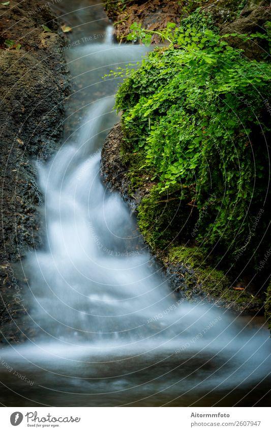 Kleine Kaskade, die im Wald fließt. schön Ferien & Urlaub & Reisen Tourismus Umwelt Natur Landschaft Park Fluss Wasserfall Stein Bewegung frisch nass natürlich