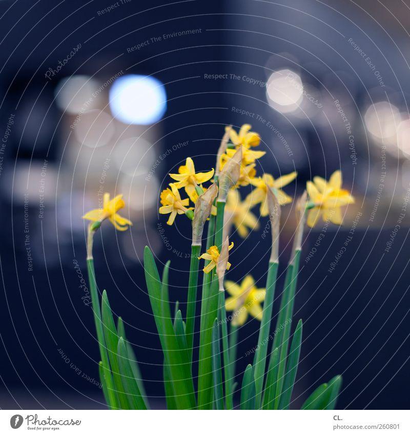 bokeh blümchen Wohnung Dekoration & Verzierung Frühling Blume Blatt Blüte Grünpflanze ästhetisch schön natürlich gelb Frühlingsgefühle Vorfreude Blumenstengel