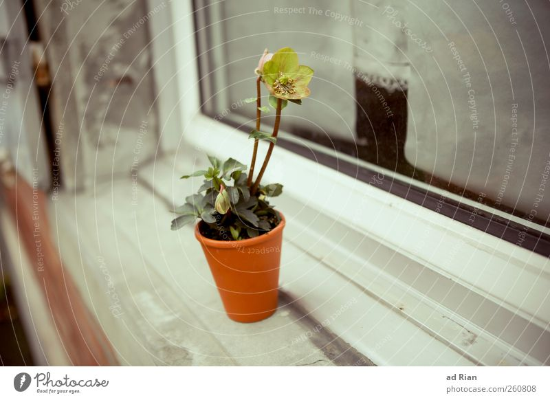 Blumen. Nur für dich! Pflanze Blumentopf Fenster Fensterbrett natürlich Warmherzigkeit sparsam Farbfoto Tag Totale