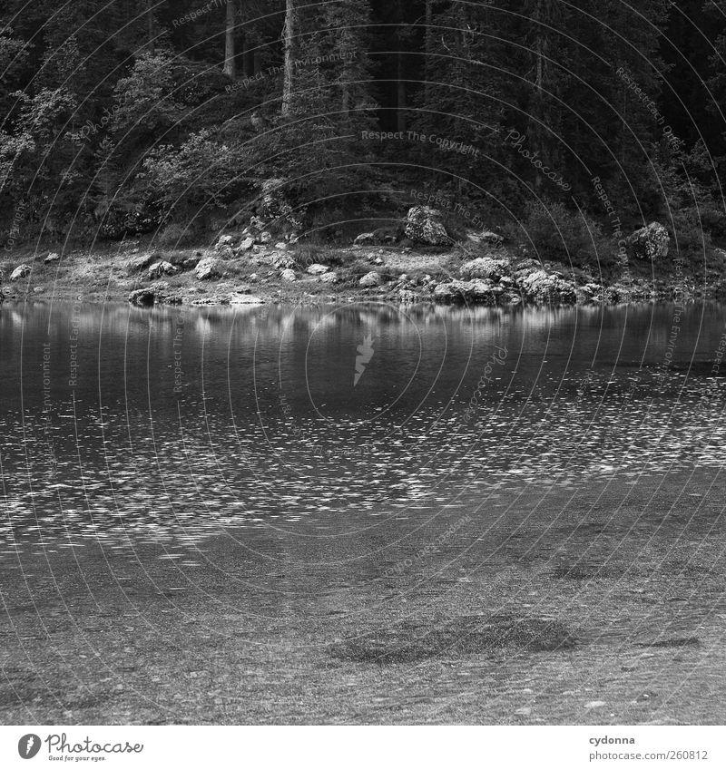 Alles vergessen Natur Wasser schön Baum Ferien & Urlaub & Reisen Sommer Einsamkeit ruhig Wald Erholung Umwelt Landschaft Leben Freiheit Wege & Pfade See