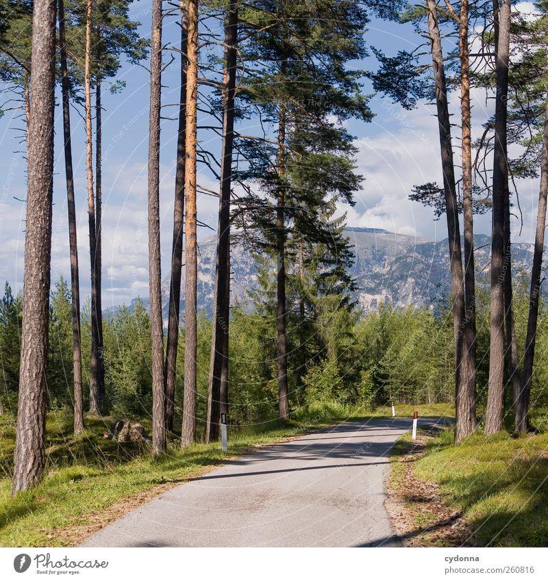 Nicht mehr weit Himmel Natur Baum Erholung Einsamkeit Landschaft ruhig Wald Berge u. Gebirge Umwelt Straße Wege & Pfade Horizont träumen Idylle Aussicht