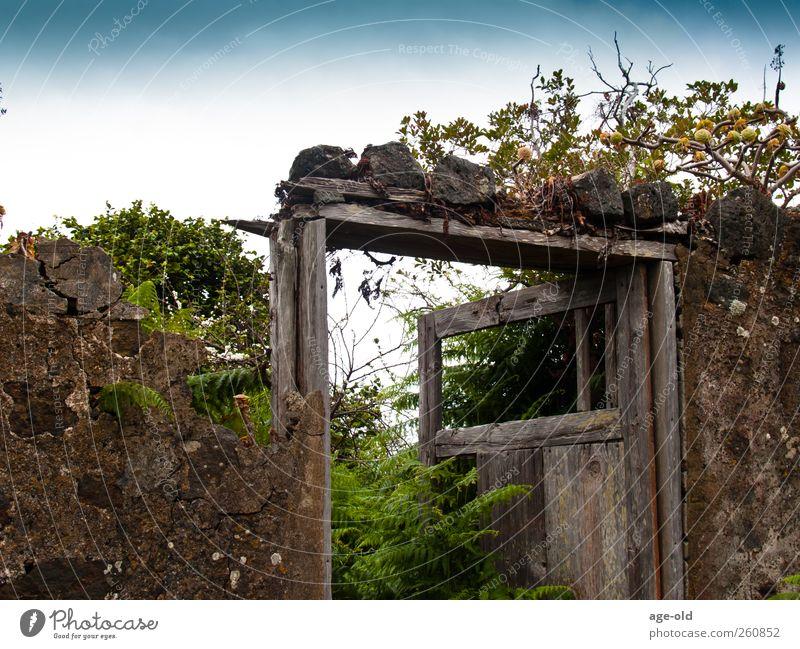 Entrance to Garden Eden Natur alt blau weiß grün rot Pflanze Blume Einsamkeit Holz grau Gras Garten braun Tür authentisch