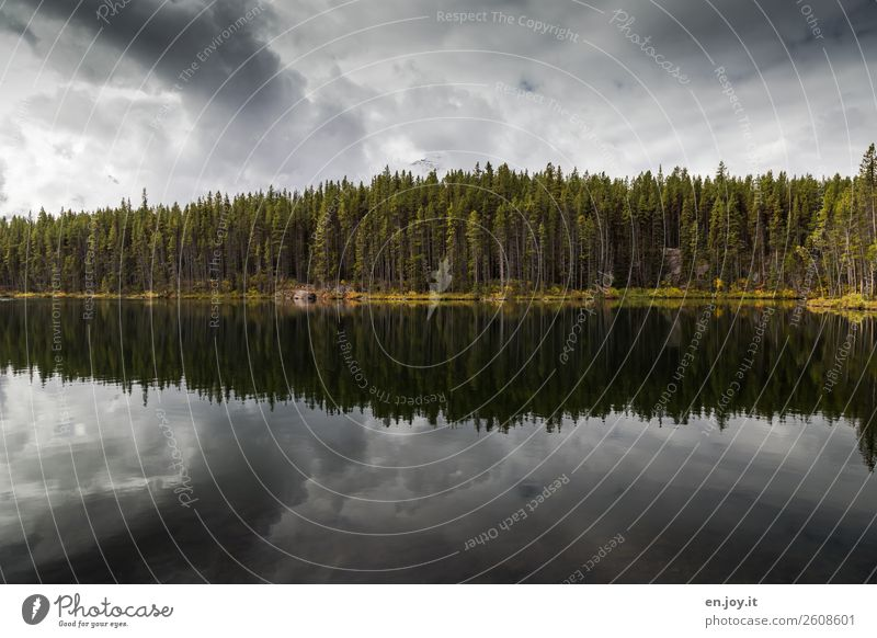 Bewölkt Ferien & Urlaub & Reisen Umwelt Natur Landschaft Himmel Wolken Gewitterwolken Wald Seeufer bedrohlich dunkel einzigartig Trauer Einsamkeit ruhig