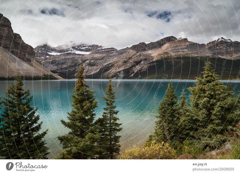 Bow Lake Ferien & Urlaub & Reisen Ausflug Freiheit Berge u. Gebirge Natur Landschaft Himmel Wolken Sommer Herbst Tanne Nadelbaum Rocky Mountains Gletscher