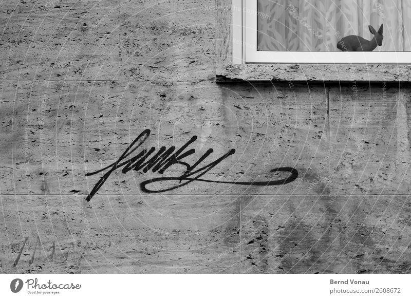 funky Stadt Mauer Wand Tierjunges modern Schwarzweißfoto flippig Graffiti Rehkitz Gardine Fenster Kitsch Figur Konflikt & Streit alt&neu grau Spießer