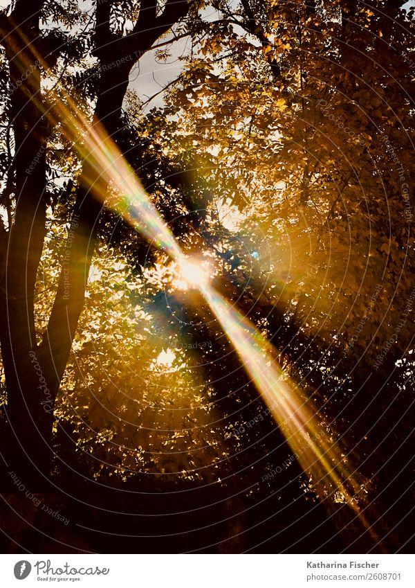 Herbsttag Natur Frühling Sommer Baum Park Wald leuchten braun gelb gold grau grün orange schwarz weiß Laubbaum Ast Blatt Farbfoto Außenaufnahme Menschenleer