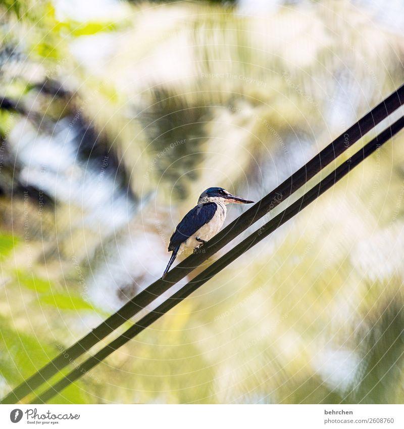 unter strom Ferien & Urlaub & Reisen Tourismus Ausflug Abenteuer Ferne Freiheit Wildtier Vogel Flügel Feder kingfisher Eisvögel 1 Tier beobachten Erholung