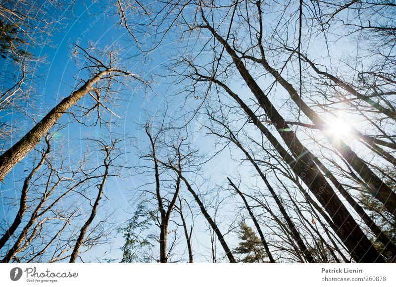 A moment´s peace Himmel Natur Baum Ferien & Urlaub & Reisen Pflanze Wald Umwelt Landschaft Erde Luft Wetter Kraft Klima ästhetisch Perspektive Netzwerk