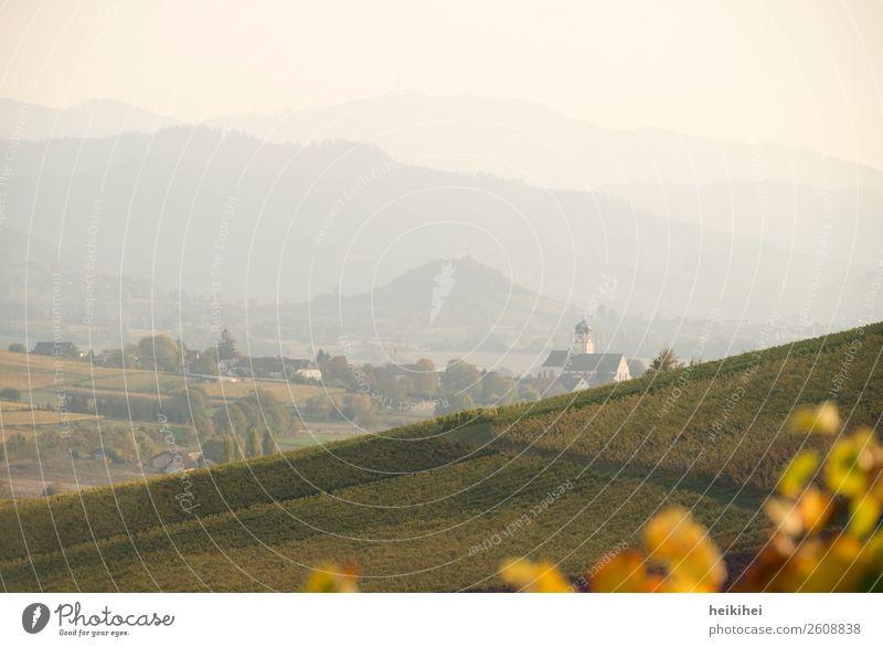 Herbst in Baden Natur Landschaft Wein Feld Hügel Berge u. Gebirge Erholung Freiheit Freizeit & Hobby Freude Frieden Religion & Glaube Kraft Lebensfreude