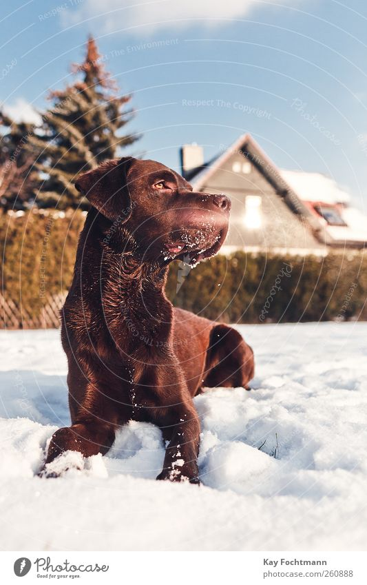 ... Hund Baum Tier Haus Fenster Schnee Garten Glück braun Kraft Wohnung Freizeit & Hobby elegant warten liegen ästhetisch