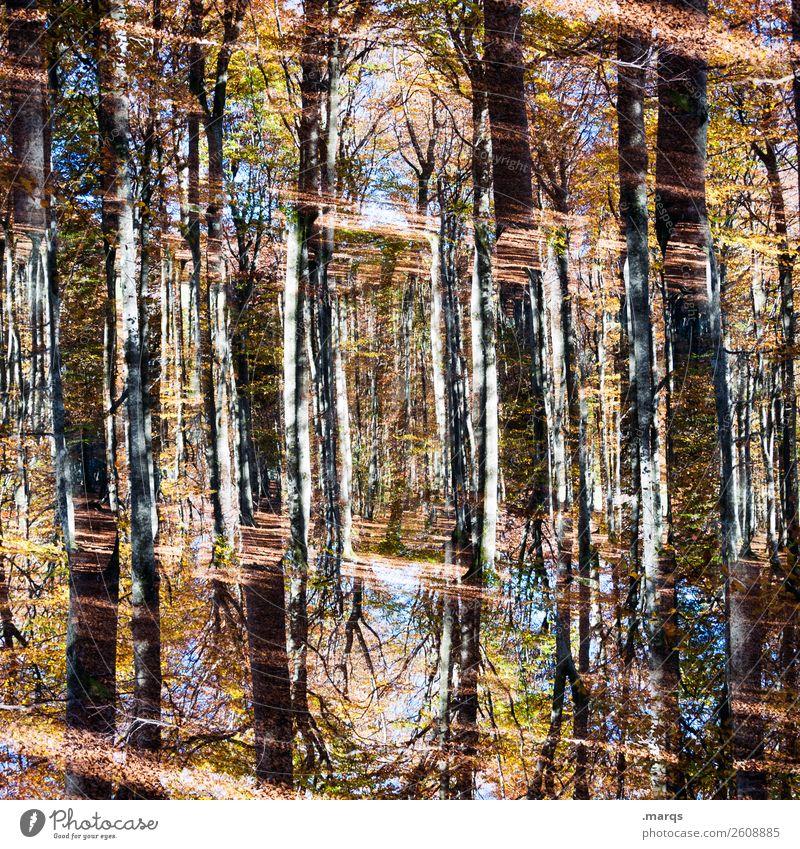 Forestry Stil Umwelt Natur Landschaft Pflanze Schönes Wetter Baum Wald außergewöhnlich trendy einzigartig Perspektive skurril Surrealismus Symmetrie