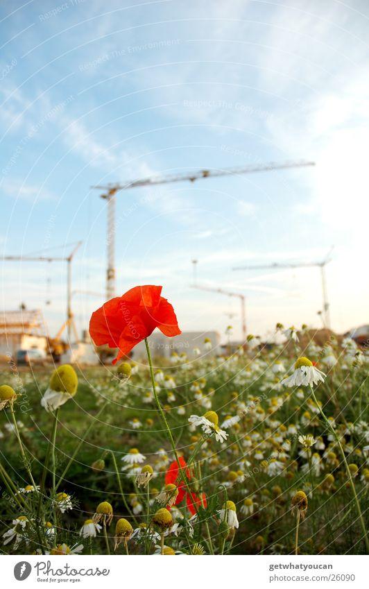 Baublümchen Himmel Blume grün blau Haus Wolken Wiese hell Baustelle Mohn
