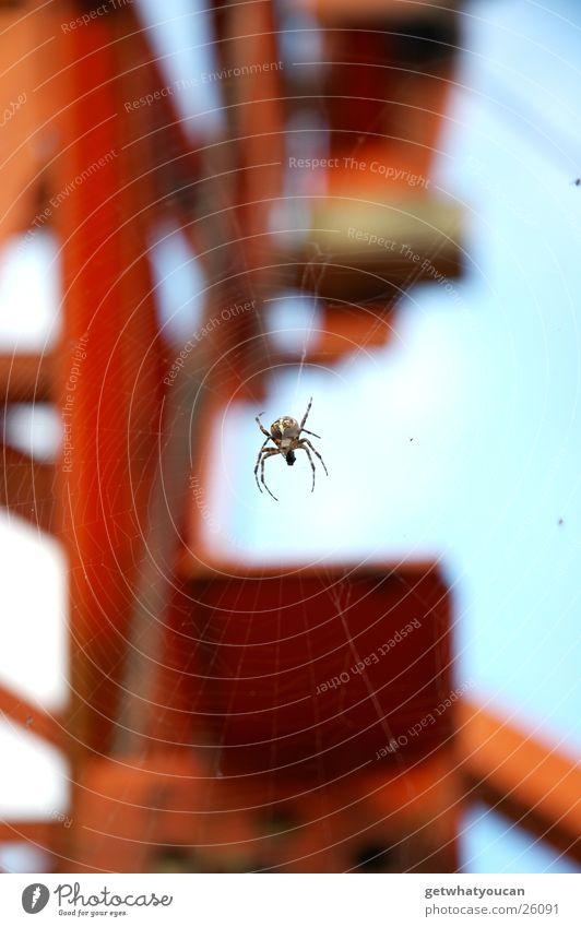 Spiderman Himmel Tier Beine hell frei Netz Baustelle Schweben Spinne Nähgarn Bagger