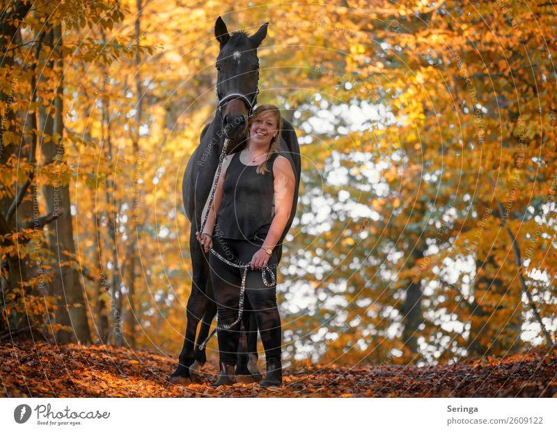 Spaziergang durch den Herbstwald Natur Pflanze Landschaft Baum Tier Wald Bewegung Park Pferd Haustier Fell Herbstlaub Tiergesicht herbstlich füttern