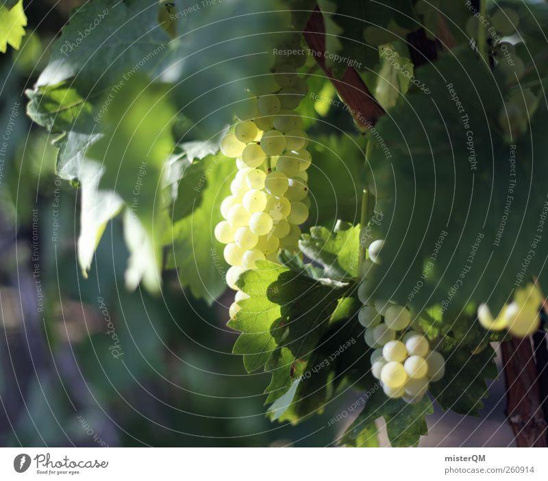 Weinschein. ästhetisch grün Weinberg Weintrauben Weinlese Weinbau Kultur Gesunde Ernährung edel Königlich reif Berghang Blatt Italien Farbfoto Gedeckte Farben