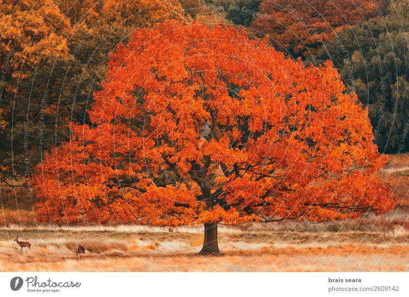 Natur Ferien & Urlaub & Reisen alt Pflanze Farbe grün Landschaft rot Baum Tier Blatt ruhig Wald gelb Herbst Umwelt