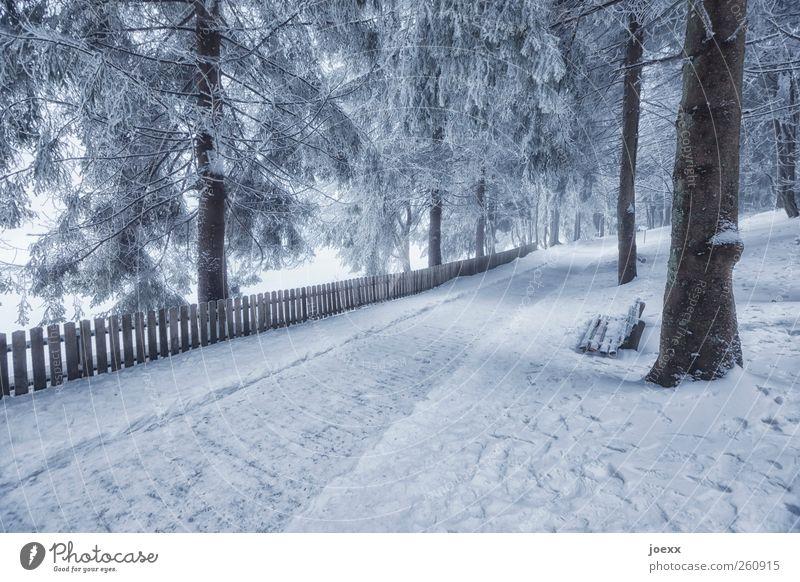 Begrenzte Aussichten Natur Winter Eis Frost Schnee Baum Wald Menschenleer Wege & Pfade hell kalt grau schwarz weiß Freizeit & Hobby Idylle Bank Lattenzaun
