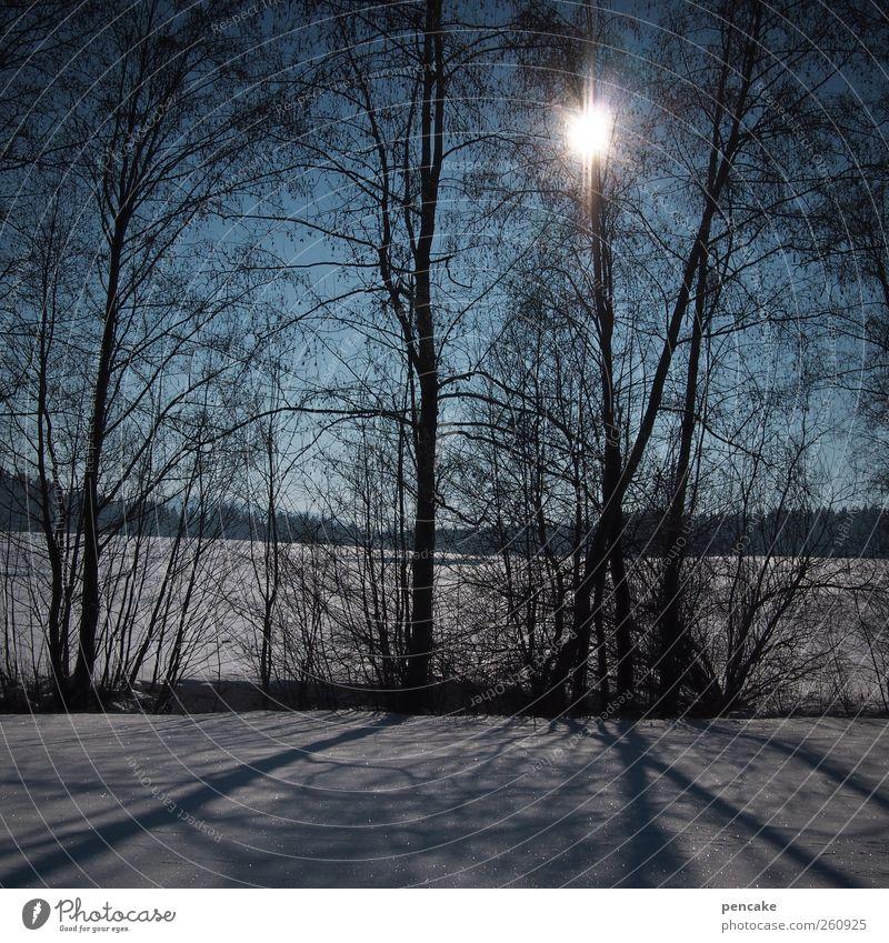 dans le soleil Himmel Natur schön Baum Sonne Winter Schnee Landschaft Stimmung Eis Frost Schönes Wetter Lebensfreude