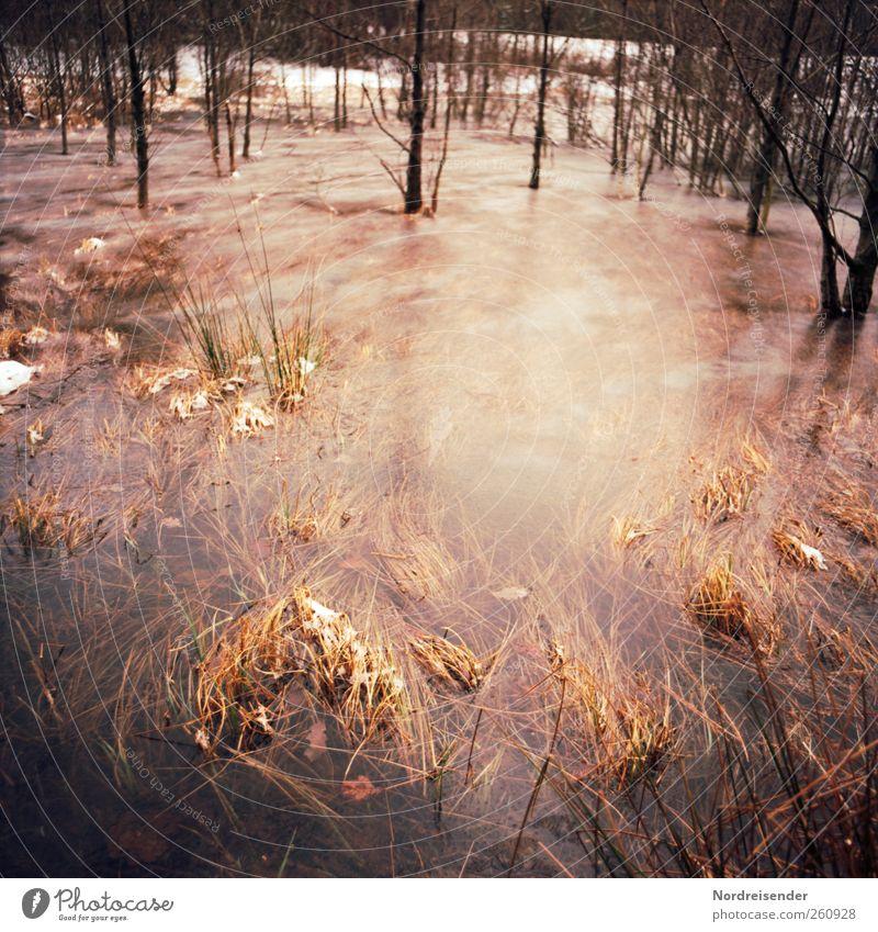 Weiterhin sehr kalt Natur Landschaft Pflanze Wasser Winter Klima Wetter Eis Frost Schnee Baum Moor Sumpf frieren stagnierend Stimmung Binsen Wasserpflanze
