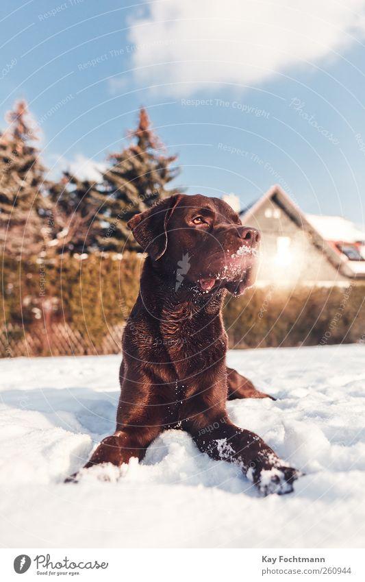 .... Himmel Hund Baum Sonne Winter Tier Haus Leben Schnee Garten Glück braun Kraft Wohnung warten liegen