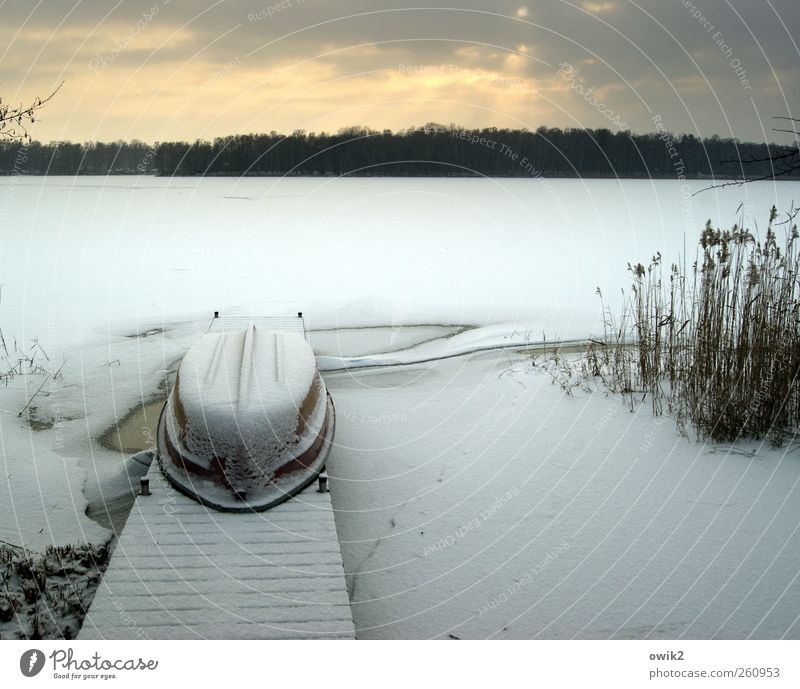 Tiefkühltruhe Umwelt Natur Landschaft Himmel Wolken Horizont Winter Klima Wetter Schönes Wetter Eis Frost Pflanze Sträucher See liegen warten Unendlichkeit kalt