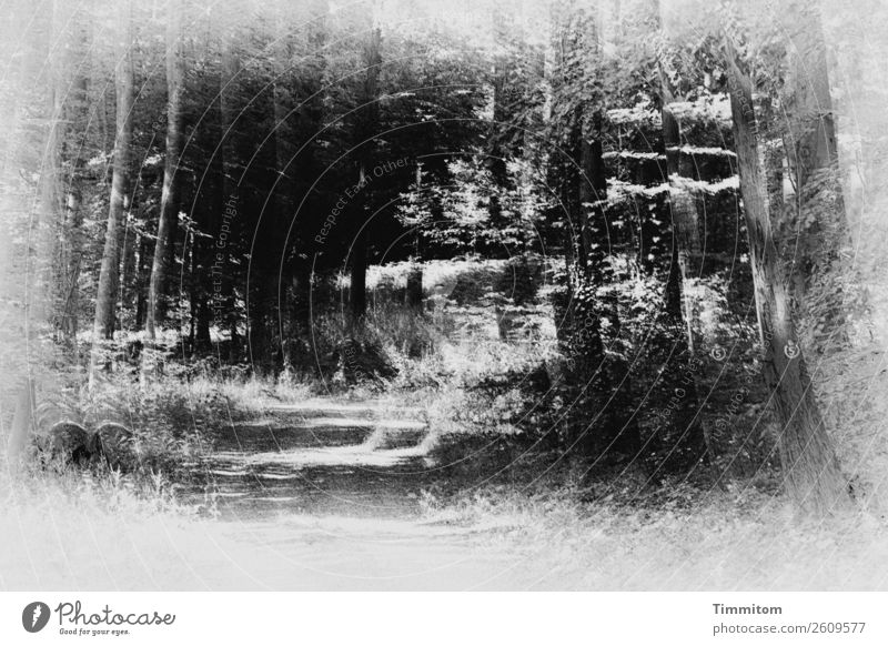 komplex | scheint dieser Weg Umwelt Natur Baum Wald Wege & Pfade grau schwarz weiß Irritation Spazierweg Fußweg Baumstamm Schwarzweißfoto Außenaufnahme