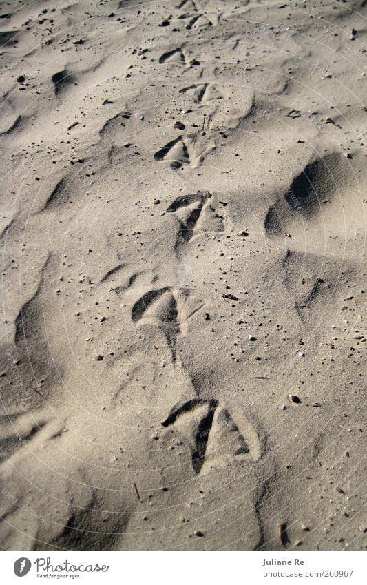 Spaziergang   Strand Natur Sand Vogel gehen natürlich ästhetisch authentisch Urelemente Sandstrand Fährte Abdruck