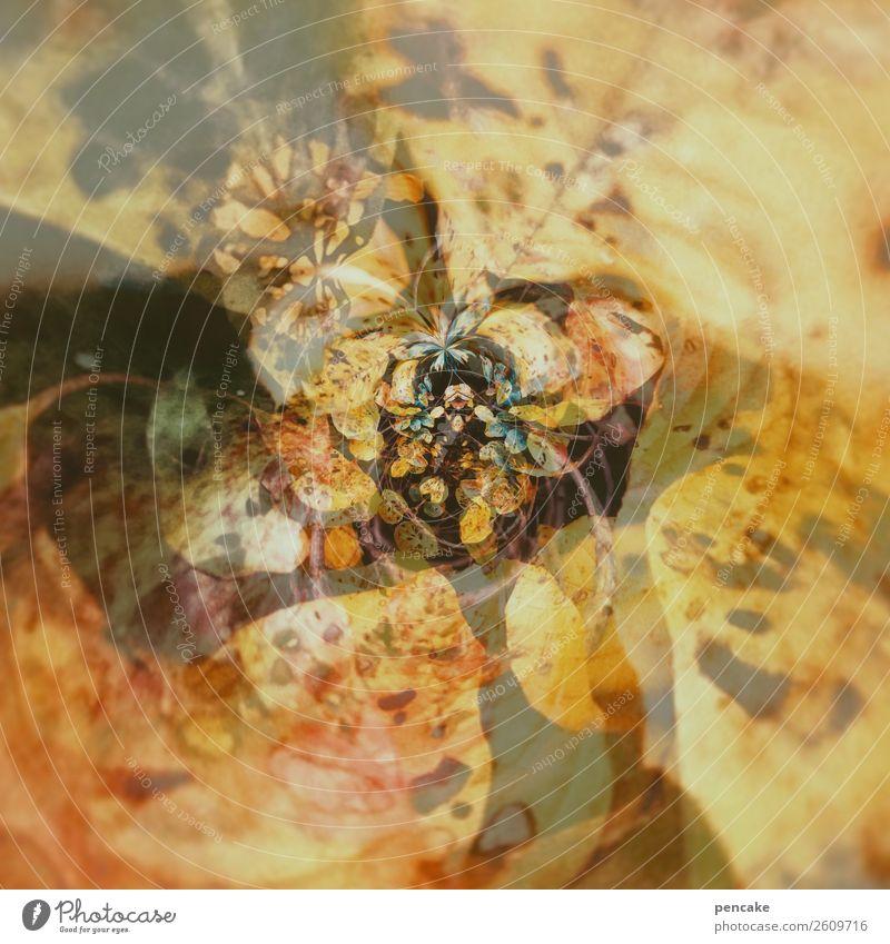 blattwerk Natur Pflanze Urelemente Herbst Wind Baum Blatt Wald außergewöhnlich Kurve rund zentral gedreht Herbstlaub tiny planet gerollt Phantasie Bewegung