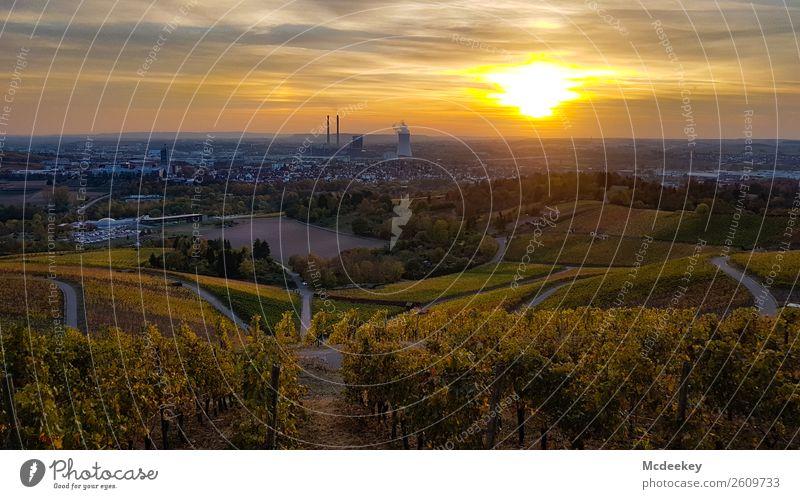 Heilbronn Umwelt Natur Landschaft Pflanze Wolken Nachthimmel Horizont Sonnenaufgang Sonnenuntergang Herbst Schönes Wetter Baum Sträucher Blatt Nutzpflanze