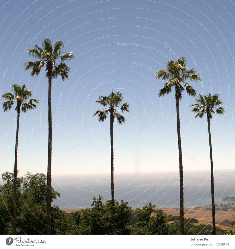 Aussicht | Palmen elegant Landschaft Himmel Wolkenloser Himmel Horizont Sonne Sommer Schönes Wetter Küste Meer Pazifik atmen beobachten Denken träumen Wachstum