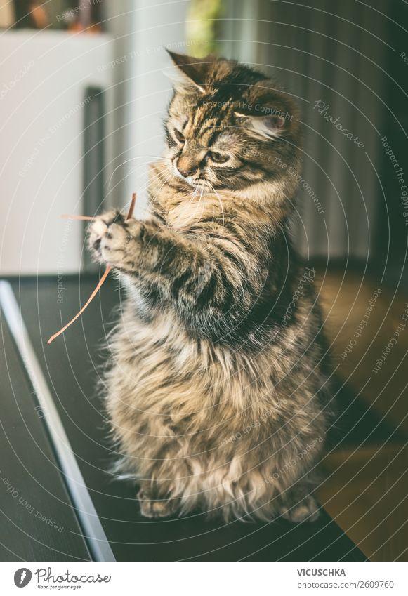 Katze sitzt auf den Hinterbeinen und spielt mit Gras Tier Freude Lifestyle lustig Spielen Häusliches Leben Design sitzen Haustier Tierliebe