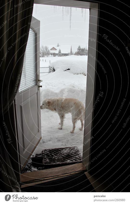 weather report | mit benno Winter Wetter Eis Frost Schnee Haus Tür Fußmatte Tier Haustier Hund Golden Retriever 1 frieren authentisch kalt Sprichwort