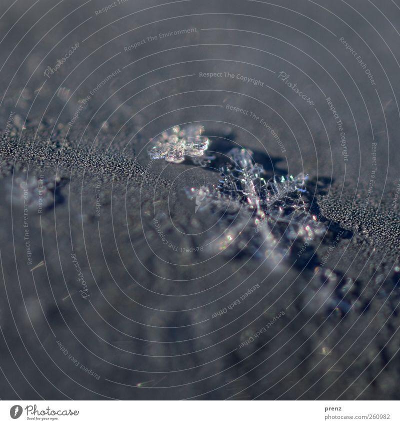 flöckchen Umwelt Natur Wetter Eis Frost Schnee blau grau Schneeflocke Stern (Symbol) Eiskristall kalt Winter Farbfoto Außenaufnahme Textfreiraum oben