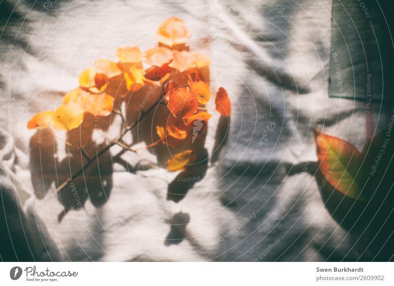 Den Herbst bewahren Wohlgefühl Erholung Häusliches Leben Natur Pflanze Blatt Grünpflanze beobachten dehydrieren mehrfarbig gelb orange weiß Warmherzigkeit